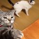 いいか!?人生はサバイバルだ!いや、猫生か!こりゃ、失礼。